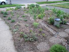 Front yard garden again - August