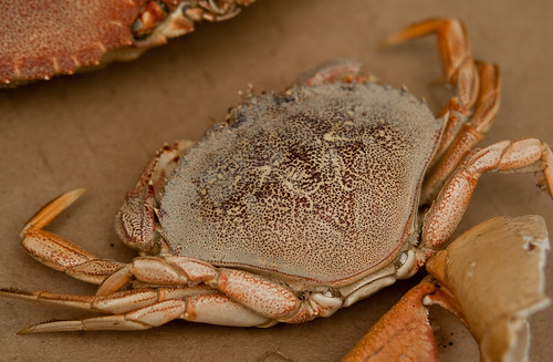 Collecting materials - Crab shell