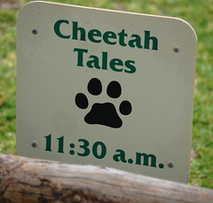 Cheetah Tales Sign