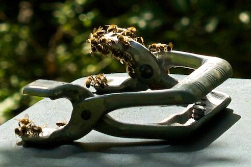 Bees on frame grip