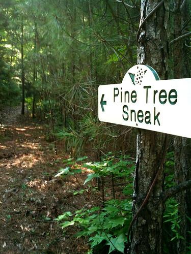 Pine Tree Sneak