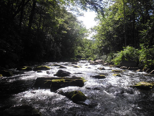 Savage River in Summer