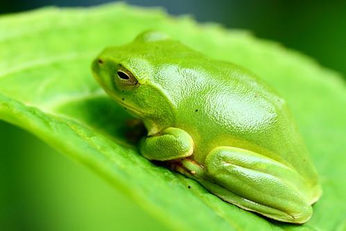 Leaf Camo