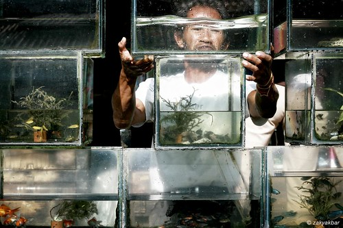 The Ornamental fish seller