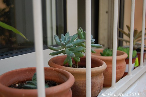 Plants in jail