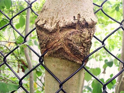 Hungry tree