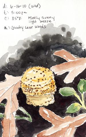 20100627_mushroom1