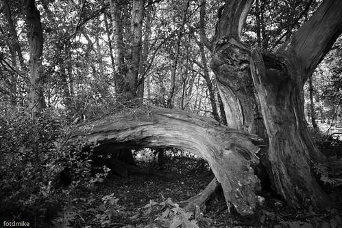 Flitwick Moor, Bedfordshire P1050956