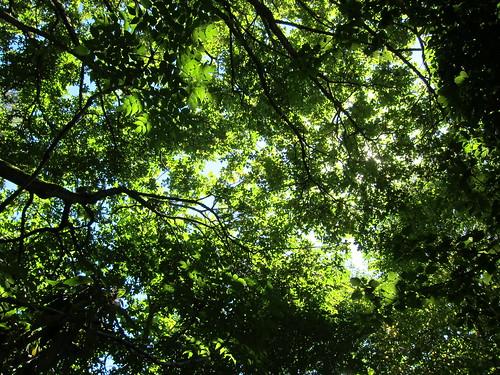 Tree Canopy - Woodland Park Zoo