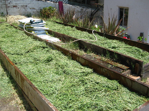 Garden 3: Alfalfa layer