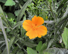 flowers 20100630_8