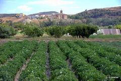 Huertas en la vega del río Aragón, con la parroquia de Santa Fe y el pueblo al fondo