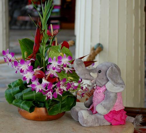 Ella Orchids