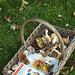 a basketful of mushrooms