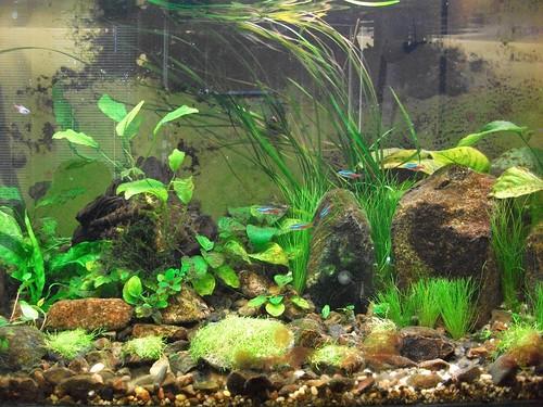 'The Lounge Garden' Aquarium