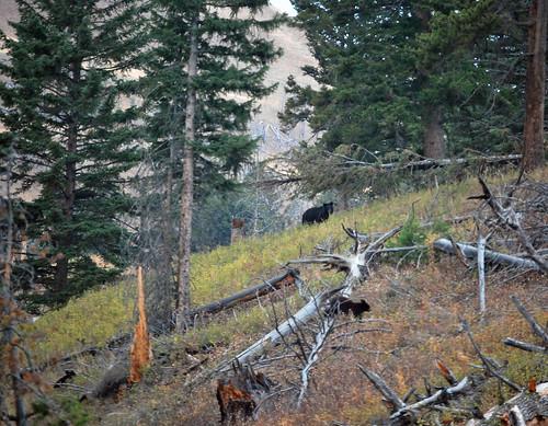 USA_166_Yellowstone_83