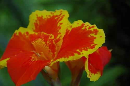 Flores silvestres de San Carlos