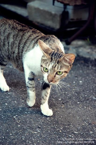 Cat。心念所至03.JPG