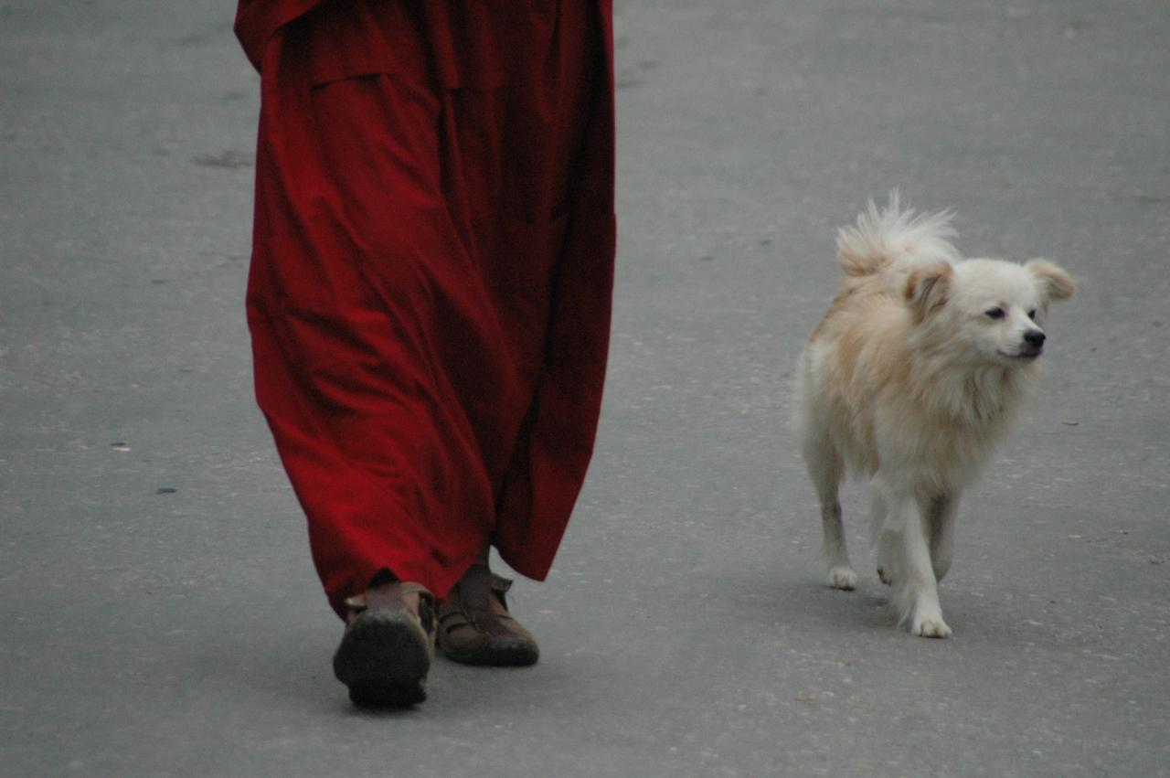 Trusted - A young monk going to Gompa with his friend
