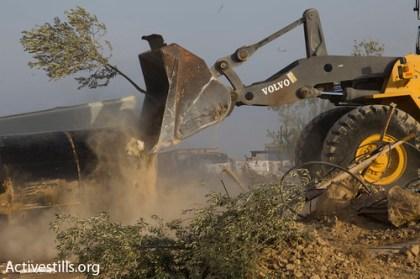uprooting olive trees of al araqeeb