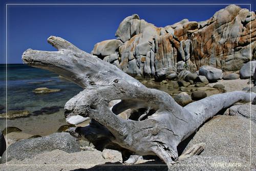 Dead Wood On The Beach