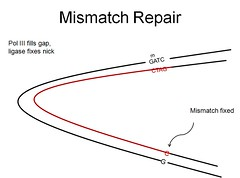 DNA Mismatch Repair 5