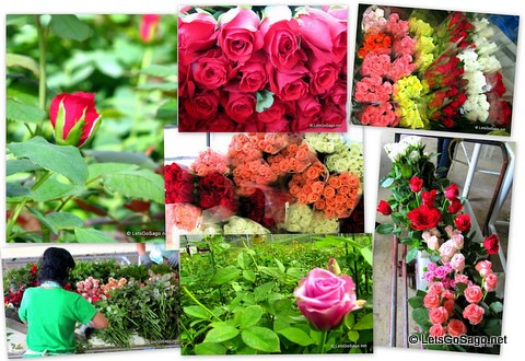 5 Thousand Flowers are distributed all over the country by Island Rose