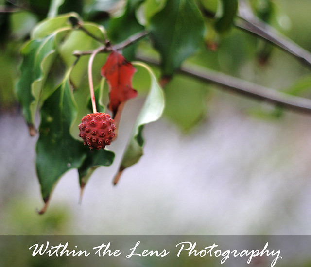 stems, berries, trees, plants, plant life, photography, within the lens