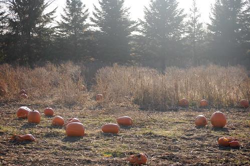 more pumpkins, for good measure