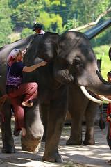 Patara Elephant Farm-17