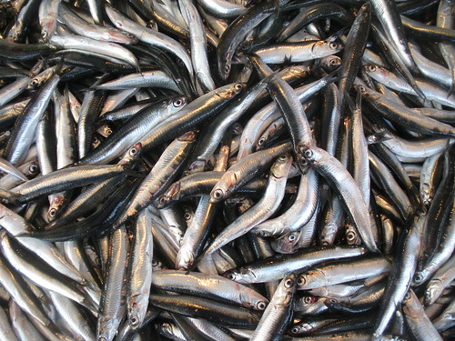 Sardines on sale in Bandirma