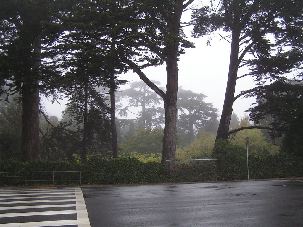 Golden Gate Park, foggy and inviting