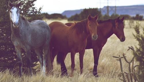 NM Wild Horses nwm (26)