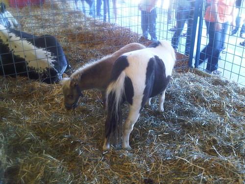 2010.09.05 Tiny Ponies