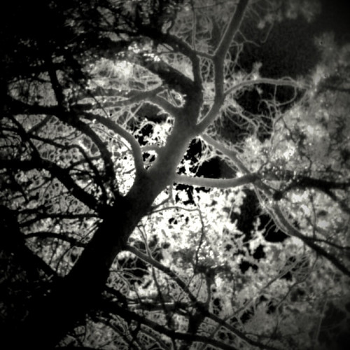 MMX 248 Tree