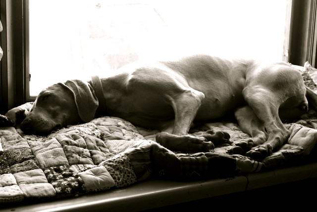 sleeping sally