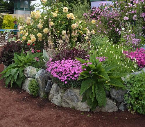 Rose & Dianthus bed