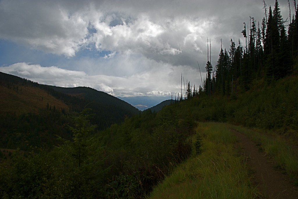 Along an old road south of Big Hole