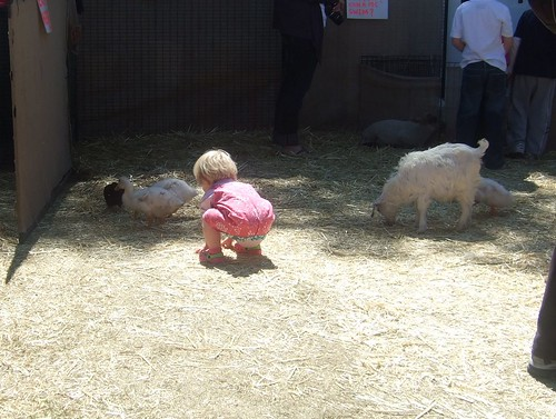 Alice at the Petting Zoo