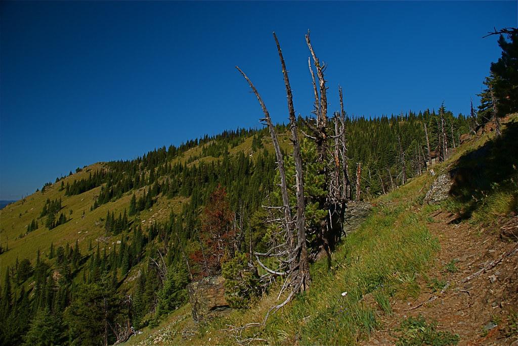Trail 478 Mt Silcox