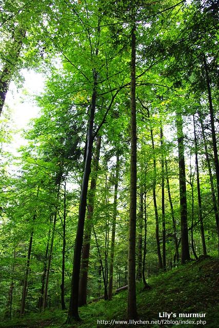看地上就知道是完全未經人工開發的,天然的原始林。