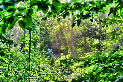 Rays of the Wood