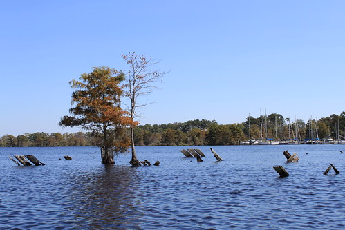 Kayaking - Pasquotank River - Old Pier and Changing Leaves near Camden Causeway Park