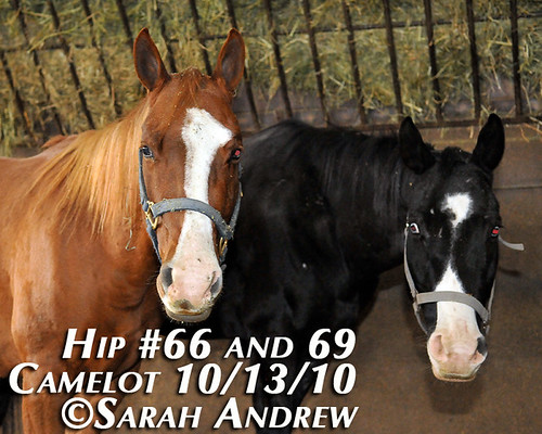 Hip #66 and 69