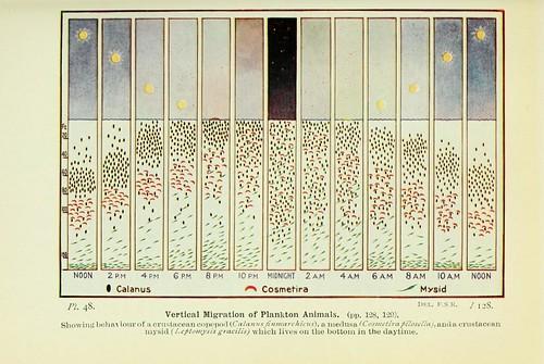 Vertical Migration of Plankton Animals