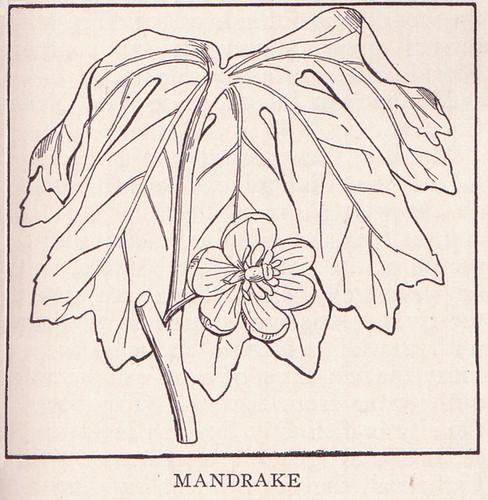 Mandrake page 1761