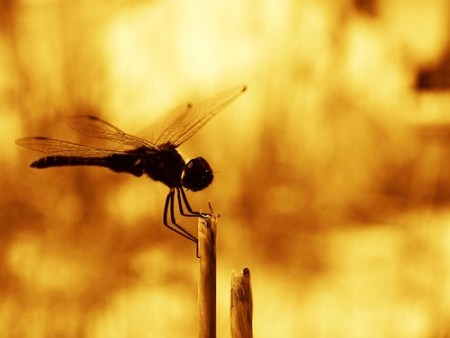 Dragonfly in Boca Grande, Florida