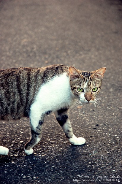 Cat。心念所至05.JPG