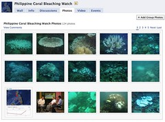 coral bleaching photos in fb