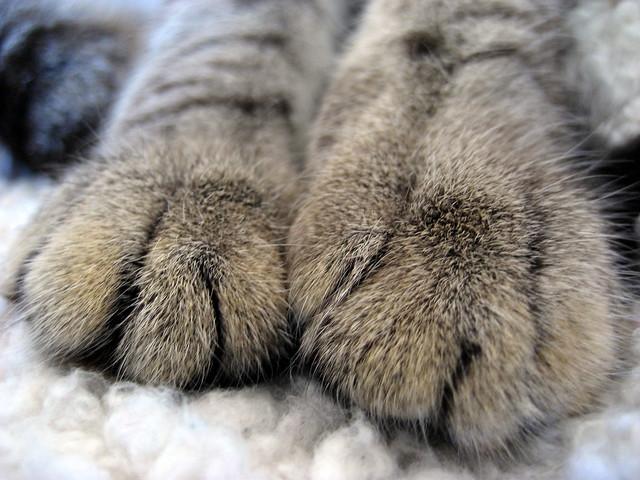 10-4-10 chun toes